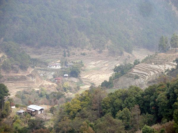Crop terracing
