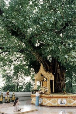 Schwedagon