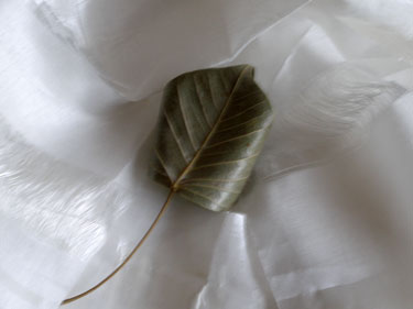 Leaf from the Bodhi Tree