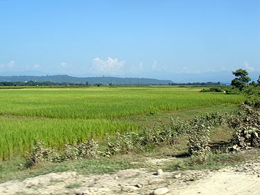 Crops in Assam