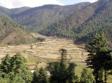Terraced crops