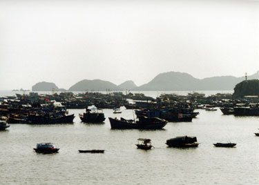 Harbour on Cat Ba island