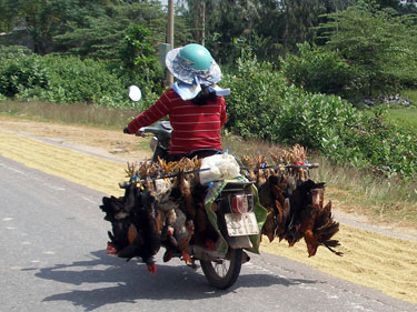Mobile chickens