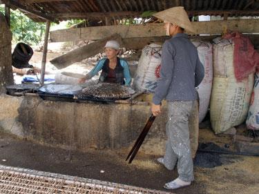 Cassava team in action