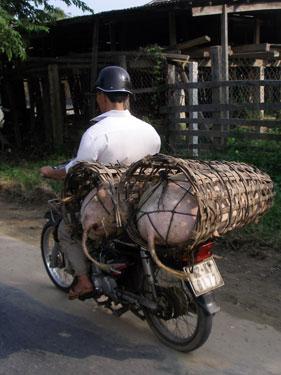Pig transportation